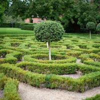 Bild för kategori Trädgård